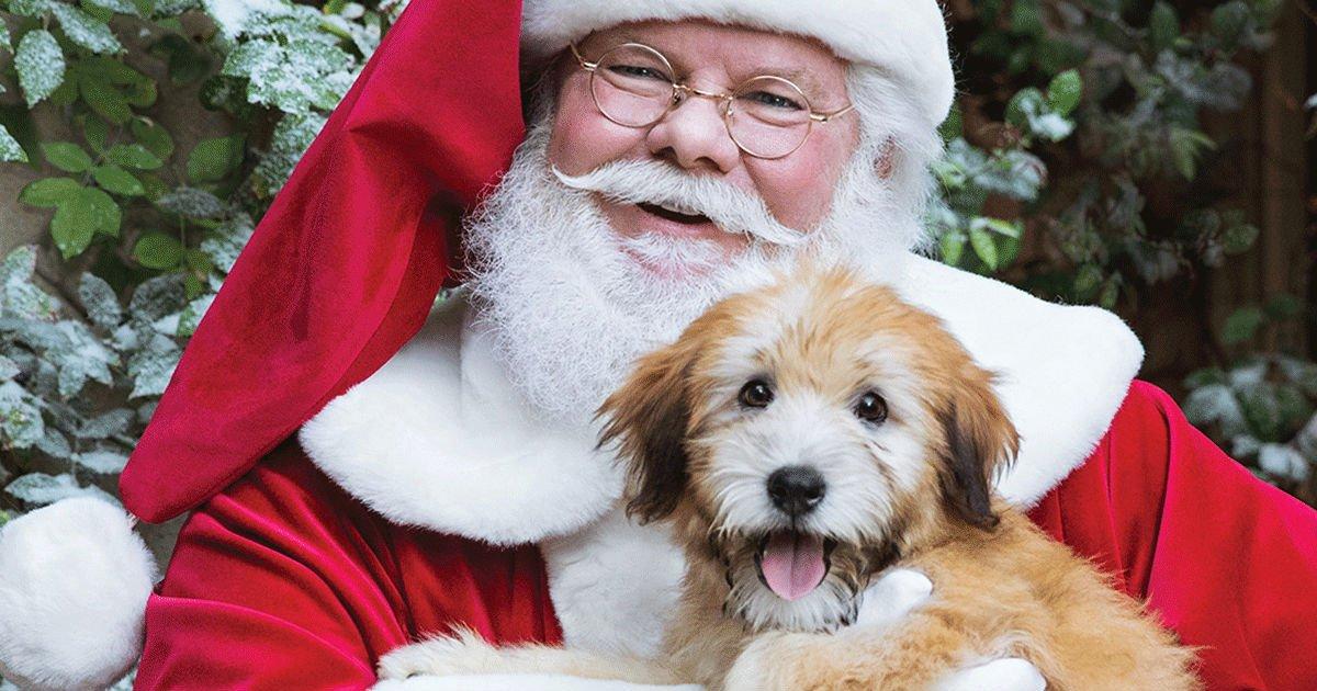 Foto GRATIS de tu Mascota con Santa en PetSmart